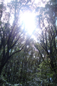 Nebelregenwald La Tigra