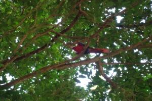 Wilder Papagei